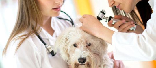 Médecin animalier